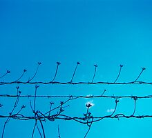 Barbed Flowers by Michael Lane