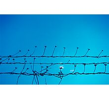 Barbed Flowers Photographic Print