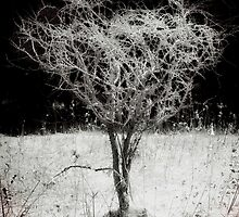 Field Tree Of Surreality by MissDawnM