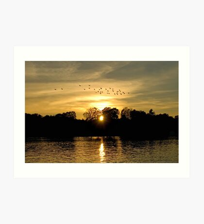Sunset with Geese Art Print