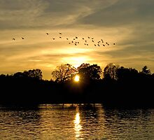 Sunset with Geese by Mary  Lane