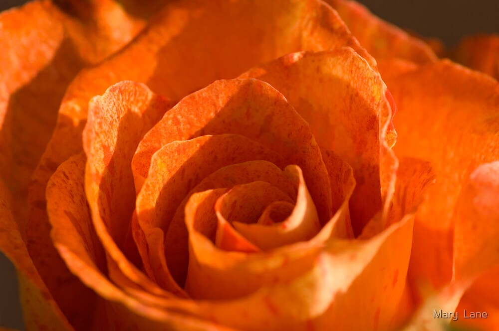 Orange Rose by Mary  Lane