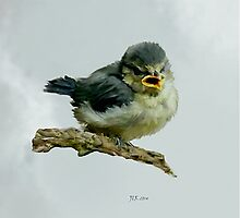 Fledgeling blue tit by Bamalam Art and Photography