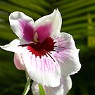 Paint Spattered Orchid by DARRIN ALDRIDGE