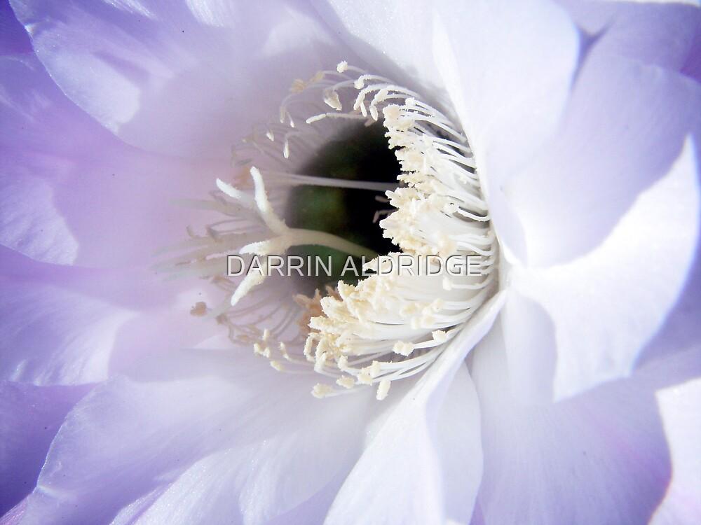 Heavenly Spiral by DARRIN ALDRIDGE