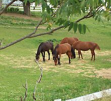 Horses grazing by astewart