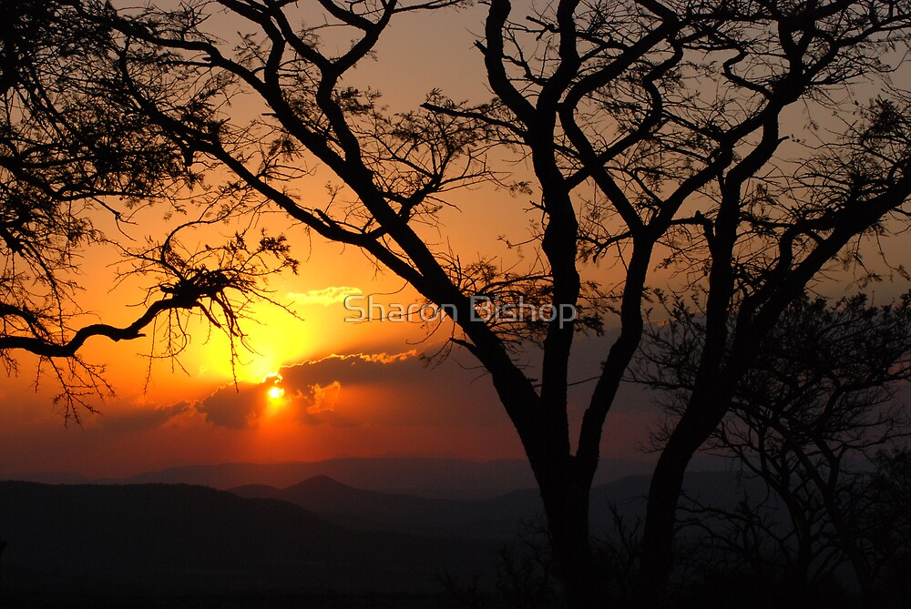 African sunset by Sharon Bishop
