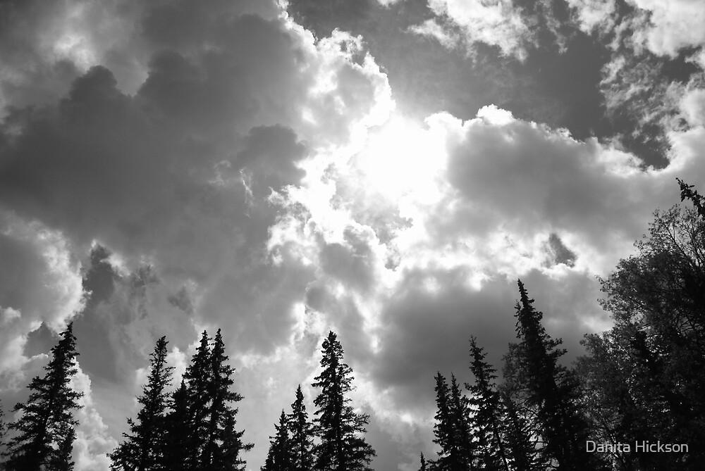 Peeking Sun - Black & White by Danita Hickson