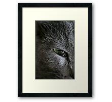 Luring Eye Framed Print