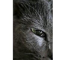 Luring Eye Photographic Print