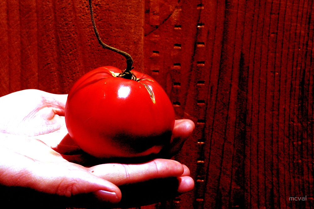 red tomato by mcval