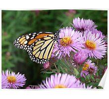 Butterfly on Purple Poster