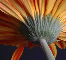 underside of a flower by misskitty