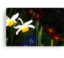 Daffodil contrast Canvas Print