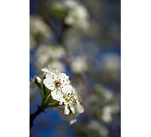 White Macro Flower Photographic Print