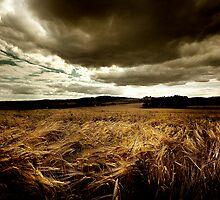 Children of the Corn. by Rob Corbett