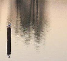 Silence by MaryO