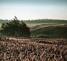 Vintage Autumn Morning Landscape by MissDawnM