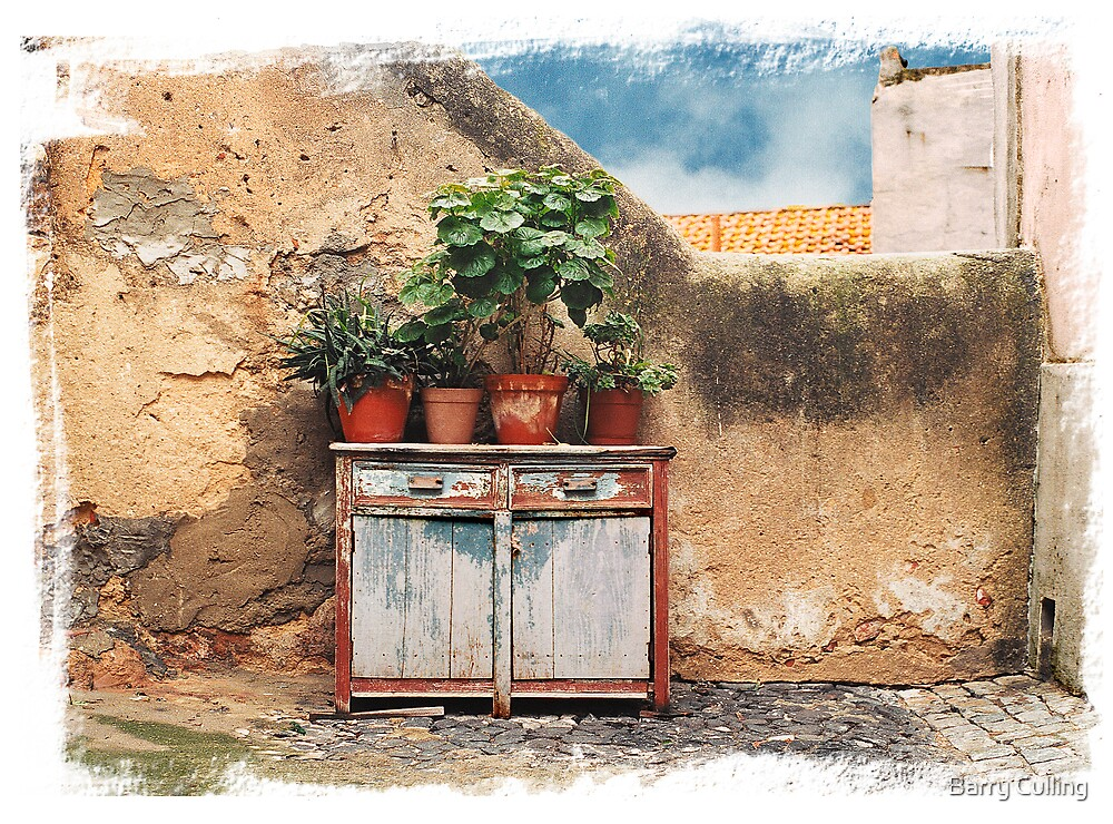 Pot plants Lisbon by Barry Culling