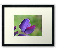 Purple Lupin Close Up Framed Print