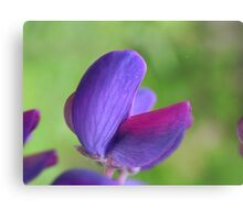 Purple Lupin Close Up Canvas Print