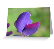 Purple Lupin Close Up Greeting Card