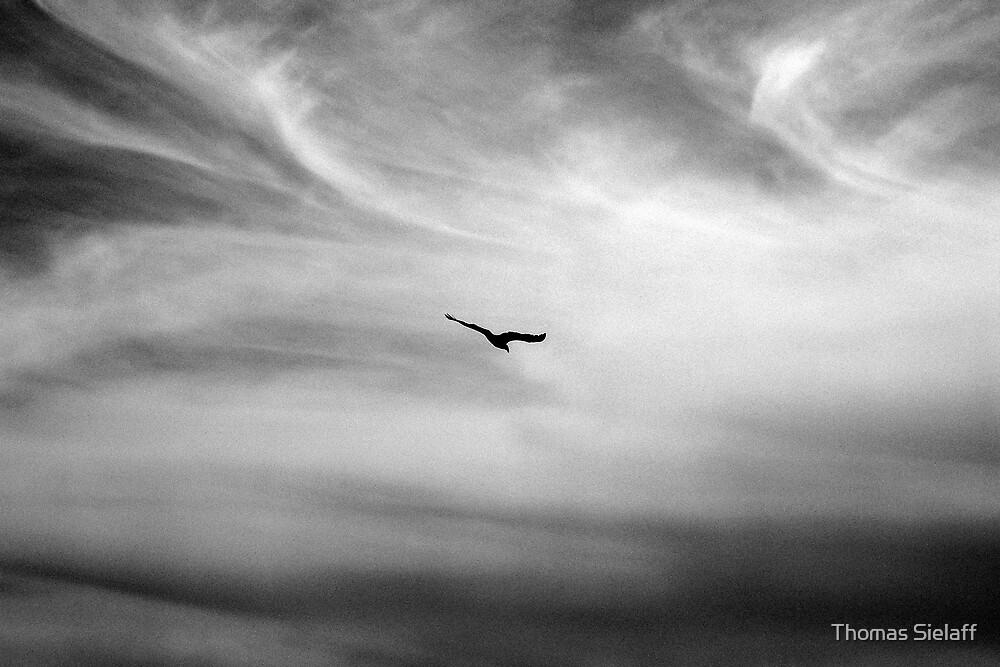 Alfred's Bird by Thomas Sielaff