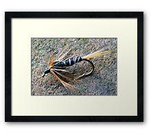 Black Stonefly Framed Print