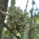 Lichen Pop by Martha Medford