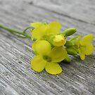 Miniature Bouquet by Martha Medford