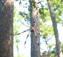 Wicked Spider by Brandi Baldwin