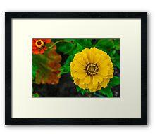 Splendid Yellow Framed Print