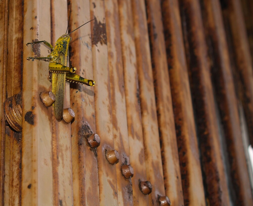 locust by lauren lederman