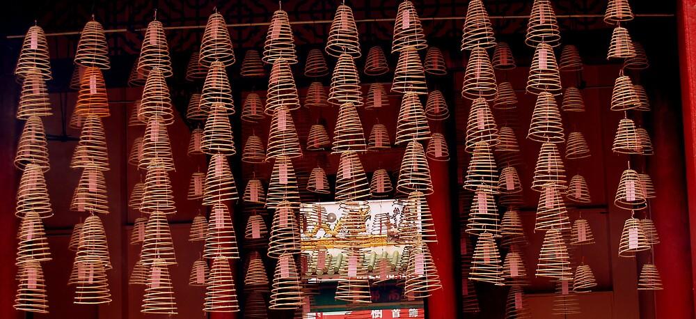 coils by lauren lederman