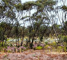 Mallee Scrub at Mungo by Carole-Anne