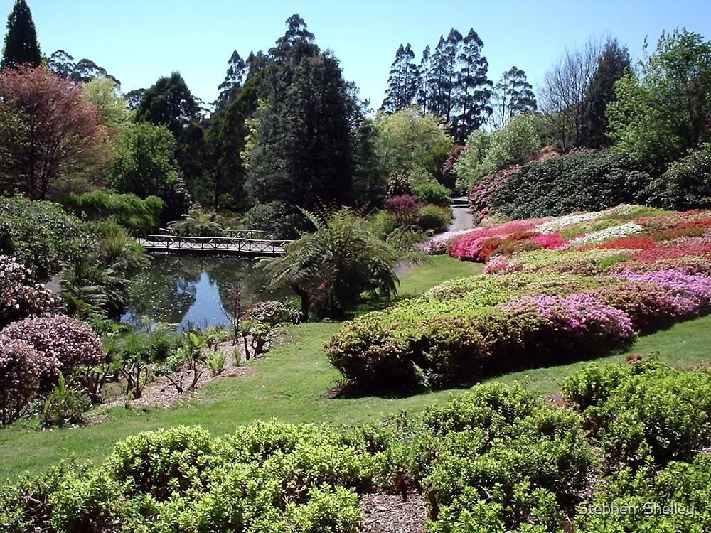 Rhododendron Gardens, Olinda, Victoria by Stephen  Shelley