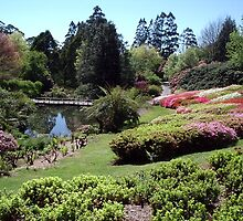 Rhododendron Gardens, Olinda, Victoria by Stephen  Shelley