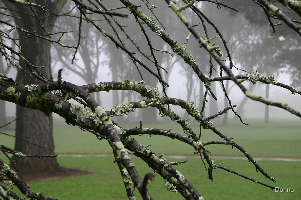 Lichen the Fog by Donna