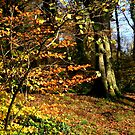 Killynether in the Autumn Sun....1 by oulgundog