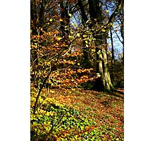 Killynether in the Autumn Sun....1 Photographic Print