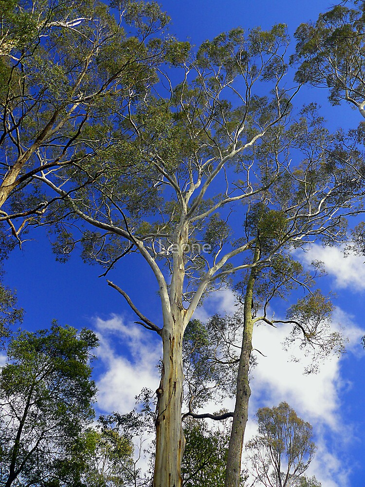 Gum Tree's and Blue Sky by Leone Fabre