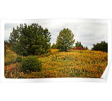 Autumn Beauty In The Park Poster