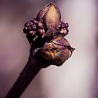 The Lilac Bud by Cathy Donohoue