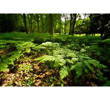Sea of Ferns. Photographic Print