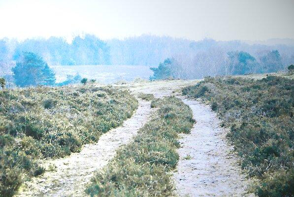 frosty walk by moseszap