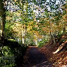 Killynether in the Autumn Sun....4 by oulgundog