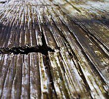 wood by rioteye