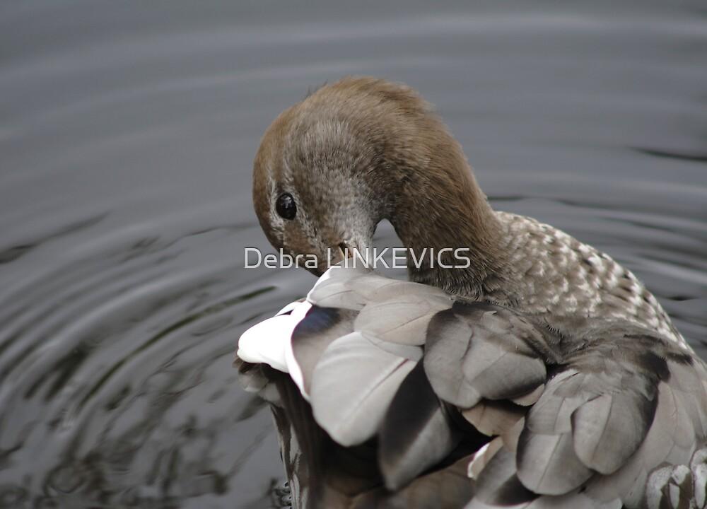 Preening Duck by Debra LINKEVICS
