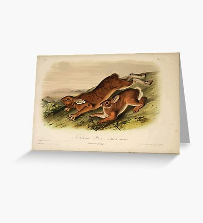 James Audubon - Quadrupeds of North America V1 1851-1854  Northern Hare Summer Pelage Greeting Card