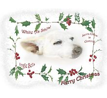 Little Tinker Has Christmas Dreams ~ Greeting Card Photographic Print